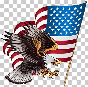 United States Bald Eagle American Eagle Outfitters Stock.xchng PNG