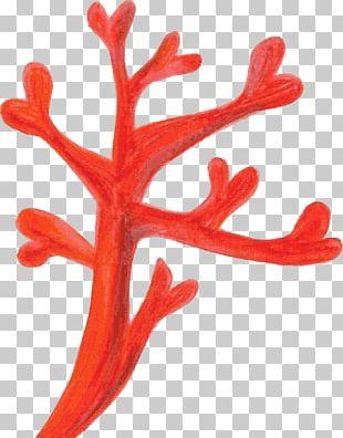 Red Coral Coral Reef PNG