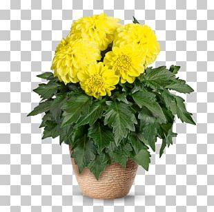 Chrysanthemum Flowerpot Plants Floral Design PNG