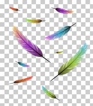 Bird Feather Drawing Stock Photography PNG