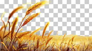 Wheat Dough PNG