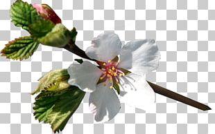 Flower Limon.KG PNG