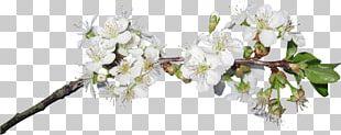 Cut Flowers Blossom PNG