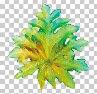 Borneo Art Flower Floral Design Vase PNG