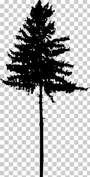 Tree Pine Silhouette PNG