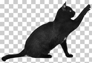 Black Cat Scratching PNG