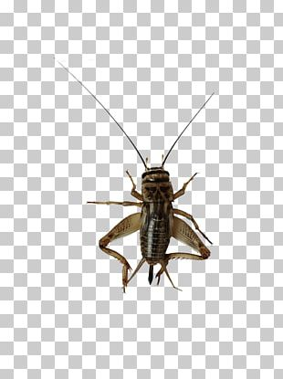 Insect File Formats PNG