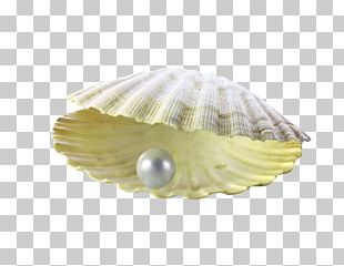 Pearl Powder Seashell Brochure PNG