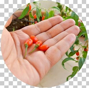 Bird's Eye Chili Raw Foodism Food Additive Goji PNG