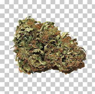 Kush Cannabis Sativa Hemp Oil Cannabidiol PNG