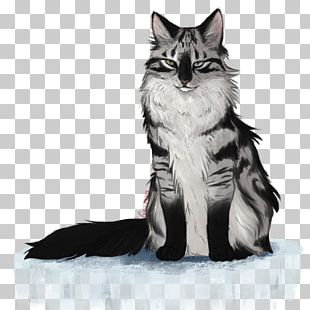 Maine Coon Norwegian Forest Cat Kitten Whiskers Domestic Short-haired Cat PNG