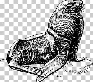 Earless Seal Art PNG