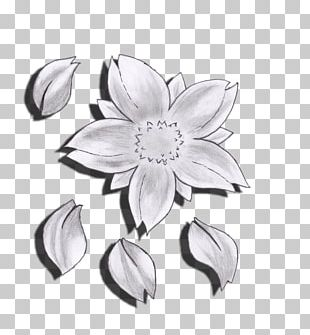 Flower Drawing Cherry Blossom Sketch PNG
