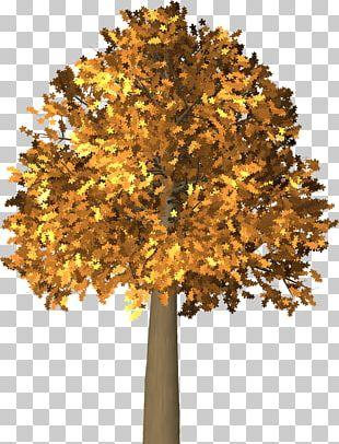 Autumn Leaf Color Tree PNG
