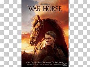 Horse Film Director DVD Cinema PNG
