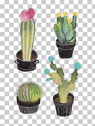 Cactaceae Succulent Plant Watercolor Painting Illustration PNG