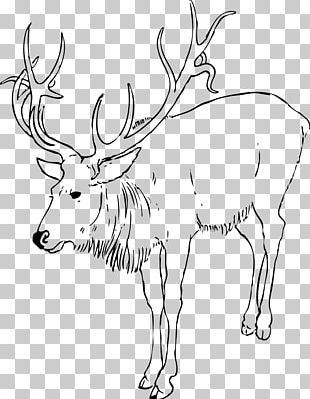 Reindeer White-tailed Deer Coloring Book Child PNG