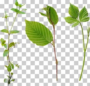 Leaf Computer Icons Chozo PNG