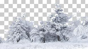 Snow Tree Winter Birch PNG