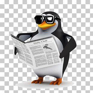 Penguin Bird Shutterstock Stock Photography PNG