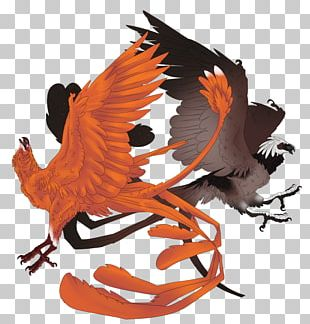 Beak PNG