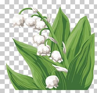 Lily Of The Valley Cut Flowers Flower Bouquet Floral Design PNG