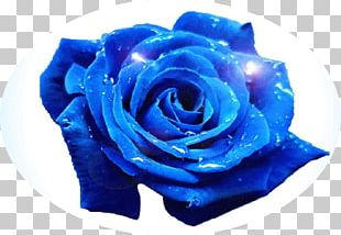 Blue Rose Flower Garden Roses PNG
