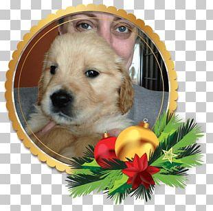 Golden Retriever Puppy Labrador Retriever Siberian Husky PNG
