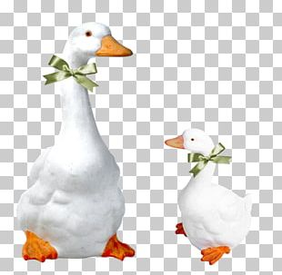 Domestic Goose Dog Bird Duck PNG
