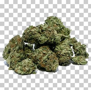 Legality Of Cannabis Medical Cannabis Legalization Cannabis Smoking PNG