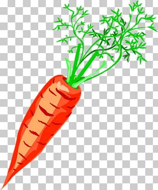 Carrot Vegetable Drawing Soup PNG
