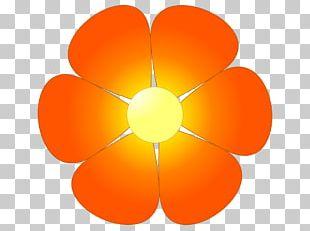 Orange Blossom Flower PNG