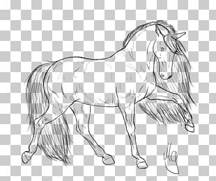Arabian Horse Clydesdale Horse Gypsy Horse Foal Friesian Horse PNG