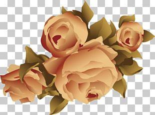 Garden Roses Beach Rose Flower Adobe Illustrator PNG