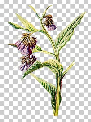 Common Comfrey Flower Drawing PNG
