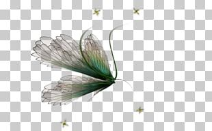 Tinker Bell Disney Fairies Fairy Desktop PNG