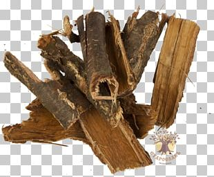 Bark English Oak Tree Root Extract PNG