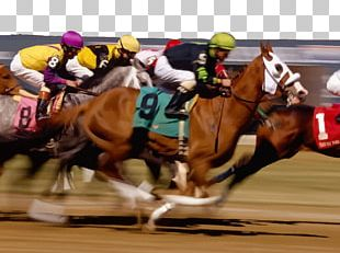 Horse Racing Sports Betting Race Track PNG