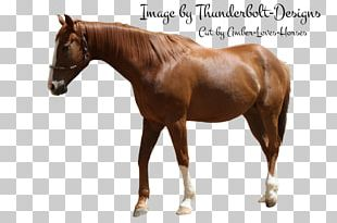 Stallion Mustang Halter Mare Horse Harnesses PNG