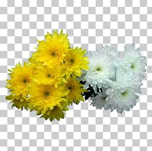 Floral Design Transvaal Daisy All Souls Day Cut Flowers Chrysanthemum PNG