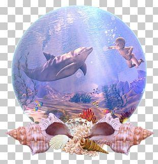 Dolphin Marine Biology Coral Reef Fish Desktop PNG