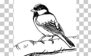 House Sparrow Drawing Birds Drawing Birds Sketch PNG
