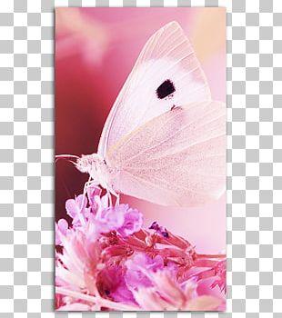 Desktop Apple IPhone 7 Plus Butterfly IPhone 6 PNG