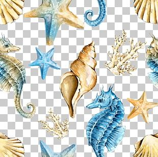 Seahorse Shellfish PNG