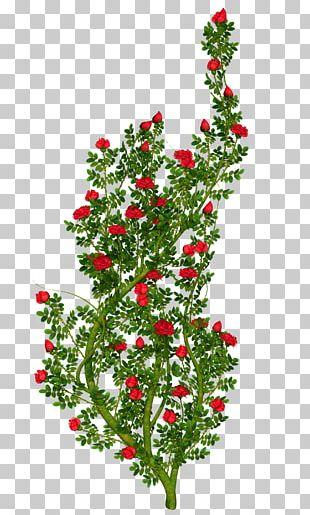 Floral Ornament Rose PNG