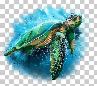 Turtle Drawing Watercolor Painting Cheloniidae PNG