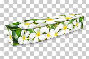 Expression Coffins Flower Funeral Frangipani PNG