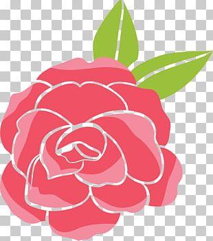 Garden Roses Beach Rose Cartoon PNG