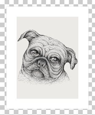 Pug Puppy Dog Breed Drawing Sketch PNG