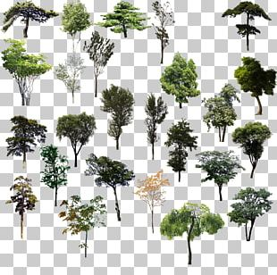Tree Adobe Illustrator PNG